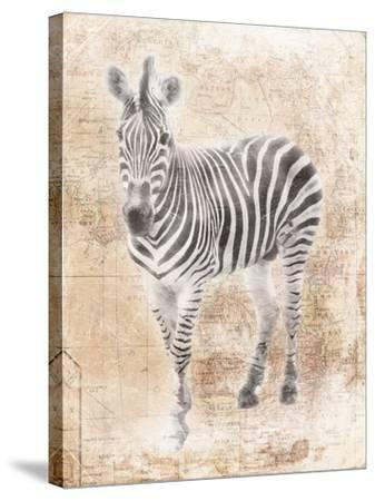 African Zebra-Jace Grey-Stretched Canvas Print