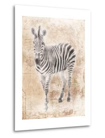 African Zebra-Jace Grey-Metal Print