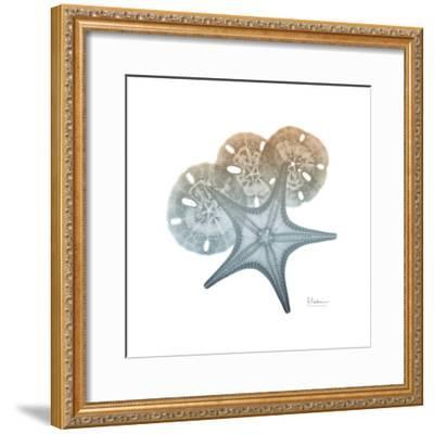 Earthy Hues Starfish and Sand Dollar-Albert Koetsier-Framed Art Print