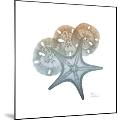 Earthy Hues Starfish and Sand Dollar-Albert Koetsier-Mounted Art Print