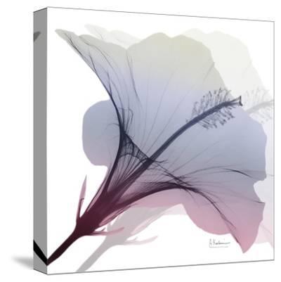 Tasty Grape Hibiscus 2-Albert Koetsier-Stretched Canvas Print