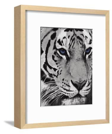 Purple Eyes-Jace Grey-Framed Art Print