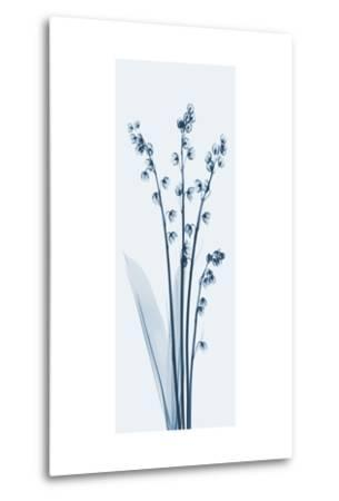 Lily of The Valley in Blue II-Albert Koetsier-Metal Print