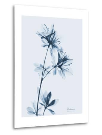 Azalea in Blue-Albert Koetsier-Metal Print