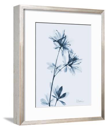 Azalea in Blue-Albert Koetsier-Framed Art Print