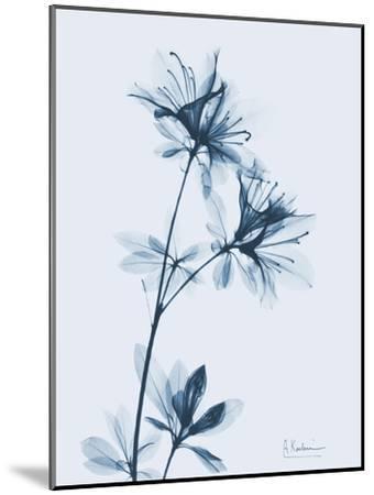 Azalea in Blue-Albert Koetsier-Mounted Art Print