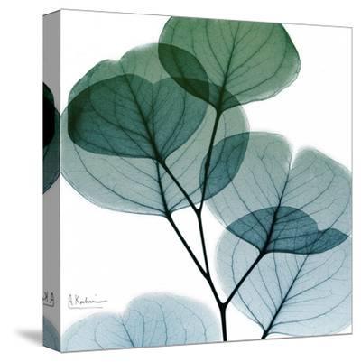 Dull Eucalyptus Mate-Albert Koetsier-Stretched Canvas Print