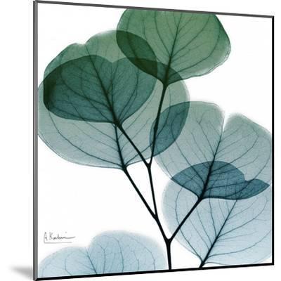 Dull Eucalyptus Mate-Albert Koetsier-Mounted Art Print