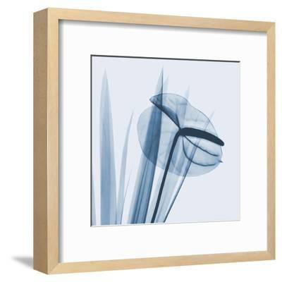 Flamingo Plant in Blue-Albert Koetsier-Framed Art Print