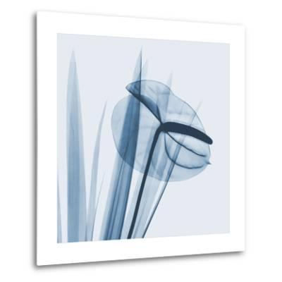 Flamingo Plant in Blue-Albert Koetsier-Metal Print