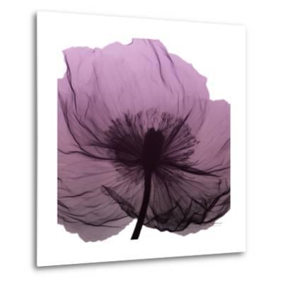 Poppy Purple-Albert Koetsier-Metal Print