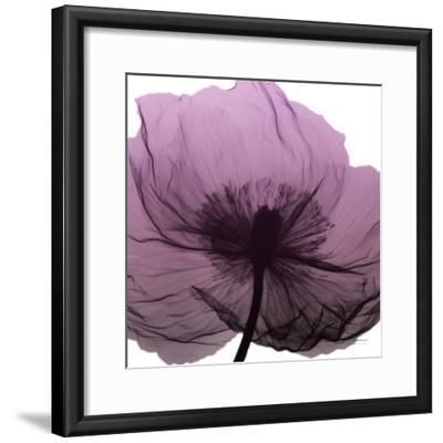 Poppy Purple-Albert Koetsier-Framed Art Print