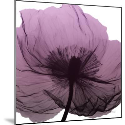 Poppy Purple-Albert Koetsier-Mounted Art Print