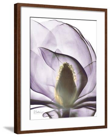 Purple Magnolia A43-Albert Koetsier-Framed Art Print