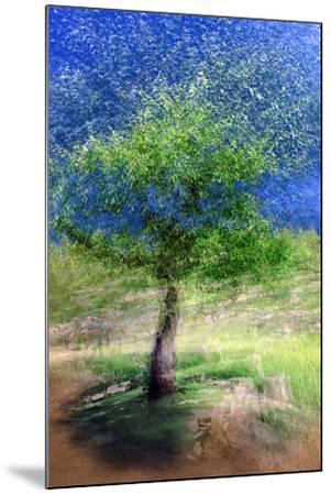 Spring Tree-Ursula Abresch-Mounted Photographic Print