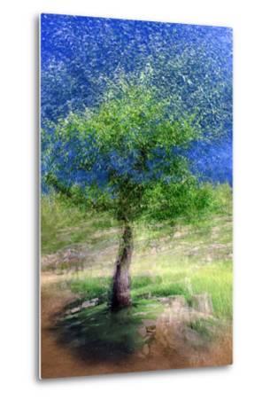 Spring Tree-Ursula Abresch-Metal Print