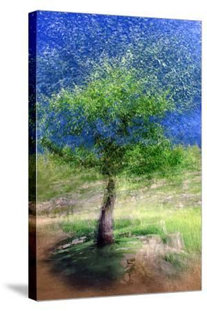 Spring Tree-Ursula Abresch-Stretched Canvas Print