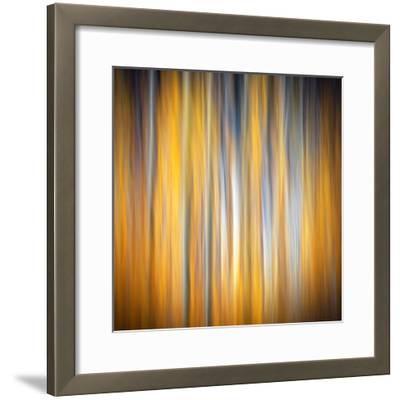 Fall Birches-Ursula Abresch-Framed Photographic Print