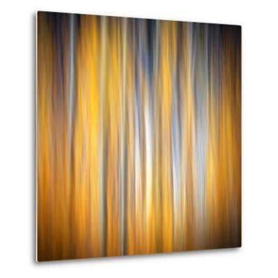 Fall Birches-Ursula Abresch-Metal Print