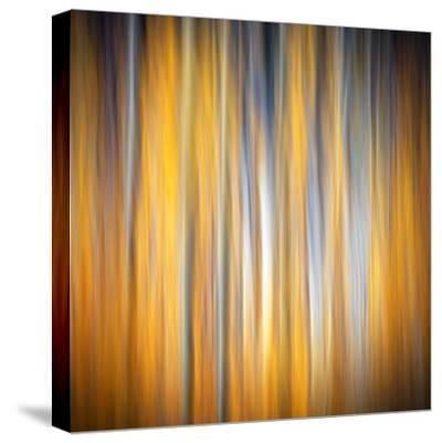 Fall Birches-Ursula Abresch-Stretched Canvas Print