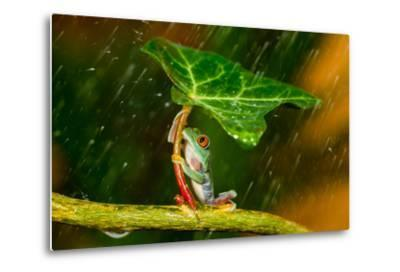 Ohh Noo :( It's Raining-Kutub Uddin-Metal Print