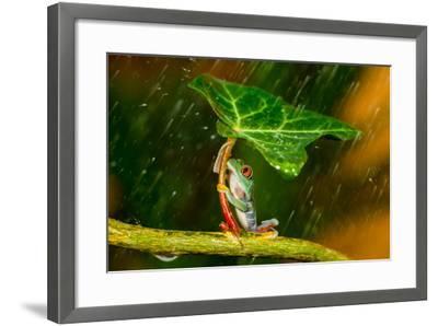 Ohh Noo :( It's Raining-Kutub Uddin-Framed Photographic Print