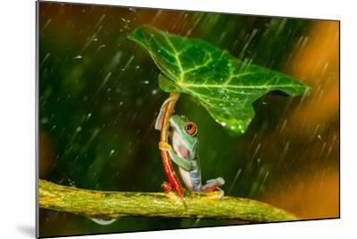 Ohh Noo :( It's Raining-Kutub Uddin-Mounted Photographic Print