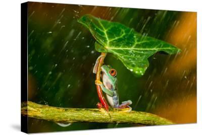 Ohh Noo :( It's Raining-Kutub Uddin-Stretched Canvas Print