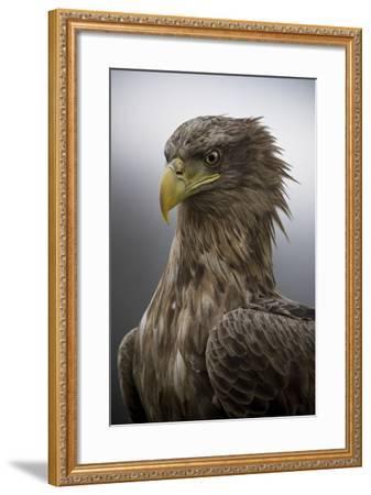 The Elderly-Csaba Tokolyi-Framed Photographic Print