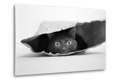 Cat in a Bag-Jeremy Holthuysen-Metal Print