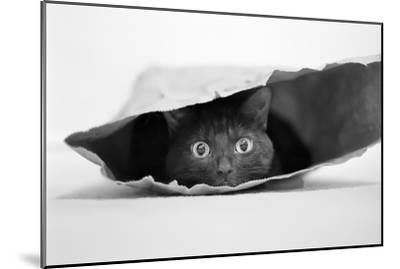 Cat in a Bag-Jeremy Holthuysen-Mounted Photographic Print