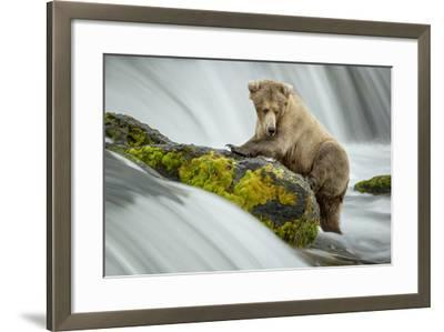 Left Wanting-Renee Doyle-Framed Photographic Print