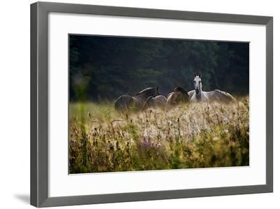 Our Garden-Milan Malovrh-Framed Photographic Print