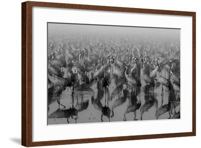Crosspoint-Ido Meirovich-Framed Photographic Print