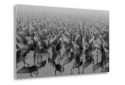 Crosspoint-Ido Meirovich-Metal Print