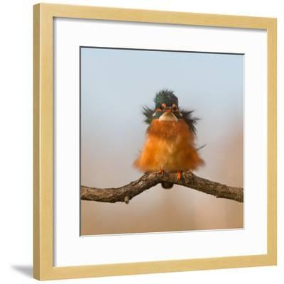 Against Wind-Cheng Chang-Framed Photographic Print