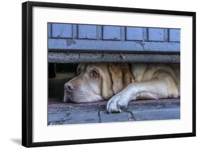 Street Watcher-Susanne Stoop-Framed Photographic Print