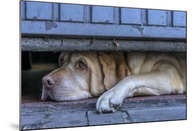 Street Watcher-Susanne Stoop-Mounted Photographic Print
