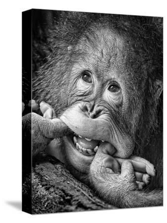 Big Smile.....Please-Angela Muliani Hartojo-Stretched Canvas Print