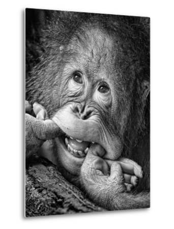 Big Smile.....Please-Angela Muliani Hartojo-Metal Print
