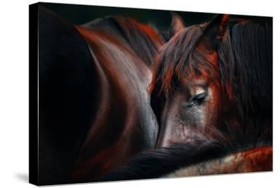 Sleep Huddle-Martin Stantchev-Stretched Canvas Print