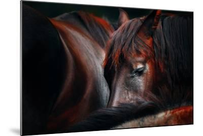 Sleep Huddle-Martin Stantchev-Mounted Photographic Print