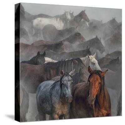 Two Horses-H?seyin Ta?k?n-Stretched Canvas Print