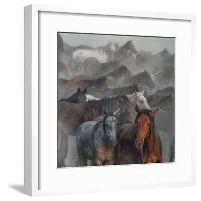 Two Horses-H?seyin Ta?k?n-Framed Photographic Print
