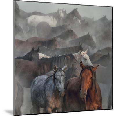 Two Horses-H?seyin Ta?k?n-Mounted Photographic Print