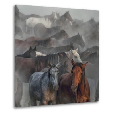 Two Horses-H?seyin Ta?k?n-Metal Print