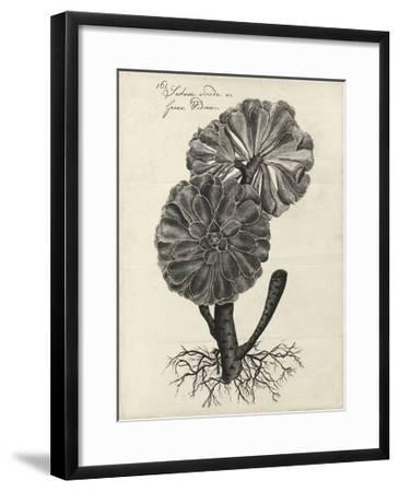 Thornton Succulents II-Robert Thornton-Framed Art Print