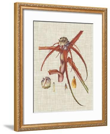 Elegant Tropicals VI-Vision Studio-Framed Art Print