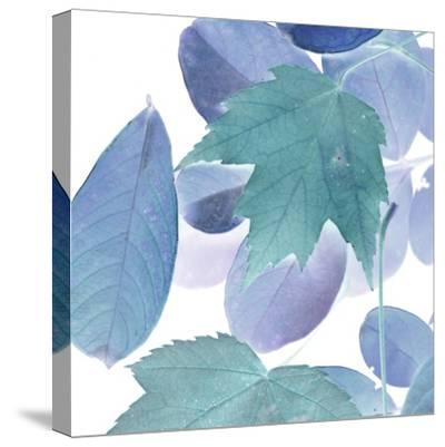 Xray Leaves III-Vision Studio-Stretched Canvas Print