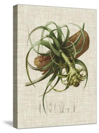 Elegant Tropicals V-Vision Studio-Stretched Canvas Print